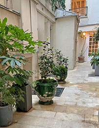 Courtyard view.  Camellia trees in green Provençal planters.