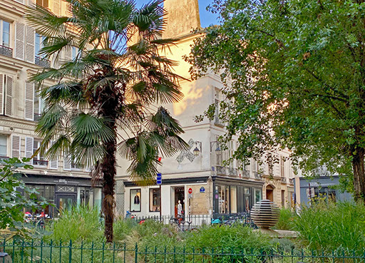 A palm tree on Rue de Seine, Paris.